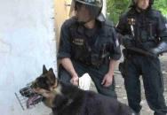 policie krize